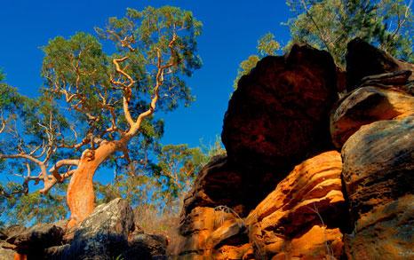 http://www.bruceusher.com.au/uploads/images/photo_grid//BUP_trees.jpg
